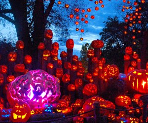 So many Jack-O-Lanterns! Photo courtesy of Roger Williams Park Zoo