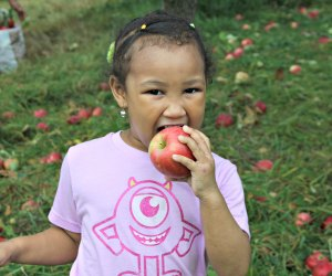 100 Things To Do With Kids In Westchester Before They Grow Up