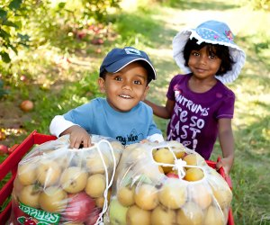 Just about an hour from Chicago, kids can pick apples at Apple Holler from mid-August to November.