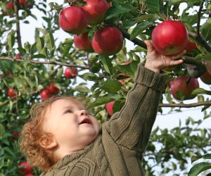 Nothing says fall like apple picking, and believe it or not, there's great apple picking near LA!