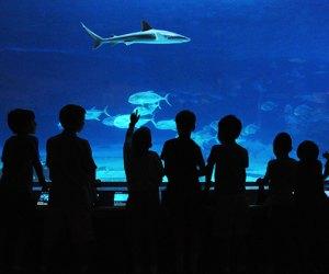 Kids in silhouette looking at The Adventure Aquarium exhibits