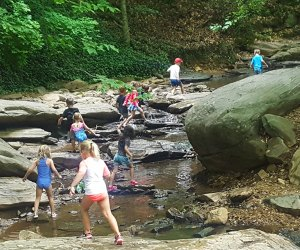 Celebrate Earth Day with an educational hike around Dunwoody Nature Center. Photo courtesy of the center