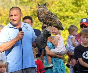 Birds of prey are on display at Hawk Watch. Photo courtesy of Audubon Greenwich