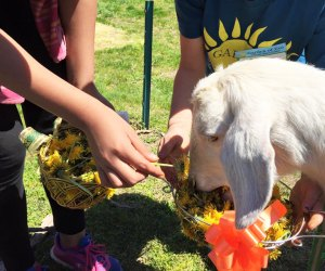 From friendly animals to fresh produce, there's plenty to love about a visit to Garden of Eve.