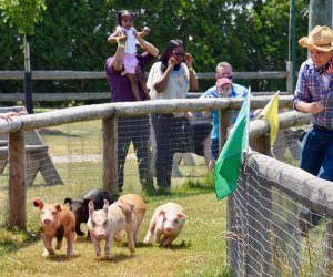 Enjoy some old-fashioned fun at the Barnyard Adventures at Harbes Family Farm. Photo courtesy of the Farm