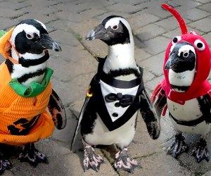 penguins in halloween costumes long island aquarium