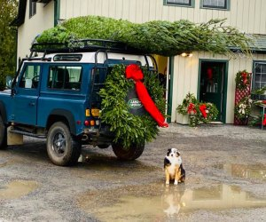 Battenfeld's Christmas Tree Farm is pet- and kid-friendly! Photo courtesy of the farm