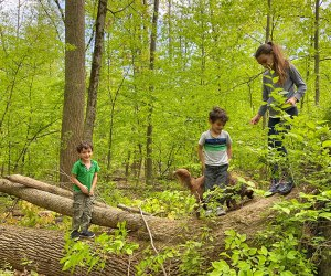 Wonder one of the many kid-friendly-trails in Westchester for a lovely spring hike.