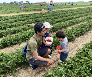 Day Trips near Chicago for Kids: Strawberry fields forever
