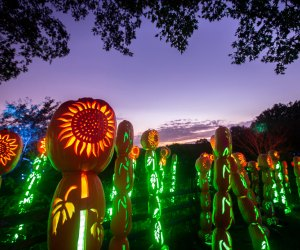 The Great Jack O'Lantern Blaze returns to Old Bethpage Village Restoration for a seasonal run beginning in late September. Photo courtesy of the venue