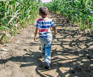 the Best Corn Maze near Los Angeles: Big Horse Corn Maze