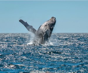 Los Angeles is the perfect place to look for whales from December to April.
