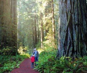 Redwood National Park. Photo via Bigstock