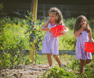 Kids can sample the fruits of their labor along the walk. Photo courtesy of Bishop's Orchards