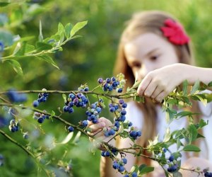 Bishop's Orchards is a gorgeous spot for berry picking while staying socially distant.