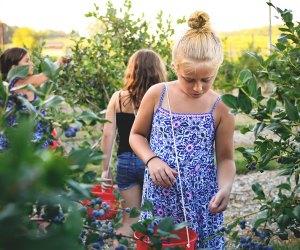 Girl picking blueberries at Bishop's Orchards