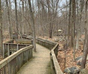 Stamford Museum & Nature Center boardwalk