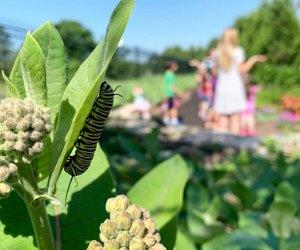 Day Trips near Chicago for Kids: Bookworm Garden