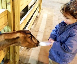 Bottle-feed the goats at White Post Farms. Photo by Jaime Sumersille