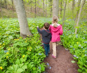 Explore nature at Bowman's Hill Wildflower Preserve. Photo courtesy of the preserve