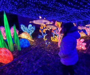 Enjoy a magical night this holiday season illuminated by the Bronx Zoo Holiday Lights. Photo by Ally Noel