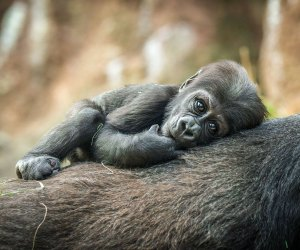 The Bronx Zoo will leave families with many heart-warming memories.