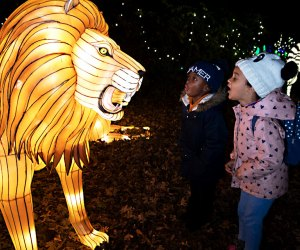 Roar to the lions at the Bronx Zoo Lights.