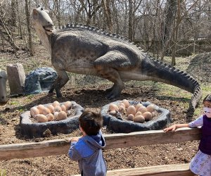 The Best Zoos and Aquariums for Chicago Kids: Brookfield Zoo