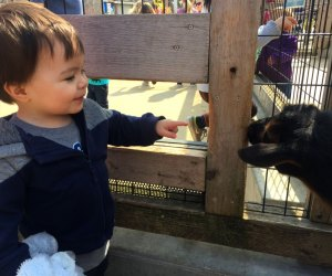 Kids Get in Free at Chicago Museums, Zoos, and Parks: Brookfield Zoo