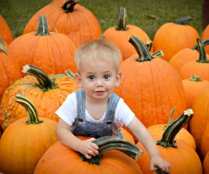 What shape and size pumpkin will your kids hunt for this year? Photo courtesy of Brown's Harvest