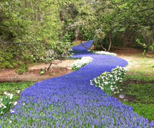 Spring Family Day Trips That Boston Kids Will Love: Bulb River in Sandwich