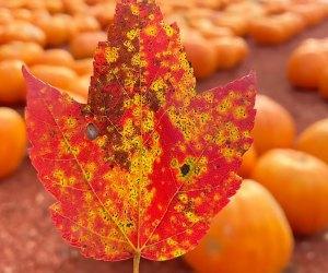 Foliage leaf at Burt's Farm