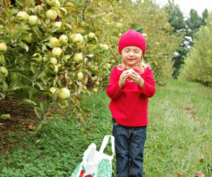 Apple picking is the perfect fall activity. Photo courtesy of Butler's Orchard