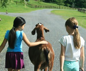 girls walking with a goat