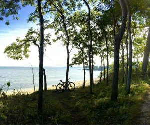 Camusett State Park's forest leads to a sandy shoreline