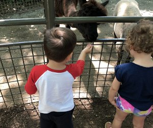 Kids can feed the animals at the Children's Zoo at the Central Park Zoo.