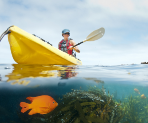 No kayaking experience required to visit the sea caves and see the sea lions. Photo by Ralph A. Clevenger/ Santa Barbara Adventure Company