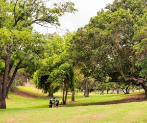 20 Things To Do in Echo Park with Kids: Chavez Ravine Arboretum