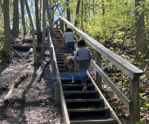 Kids climb the stairs on the hiking trail at Cheesequake State Park
