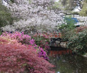 When ther cherry trees bloom, Descanso Gardens become the most magical place in LA.
