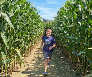 Cherry Crest Adventure Farm's corn maze in Ronks was voted tops in the nation. Photo by Kristen Sullivan