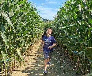 Cherry Crest Adventure Farm's corn maze in Ronks was voted tops in the nation. Photo by Kristen Sullivan
