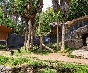 Secrets of the LA Zoo: Chimpanzees