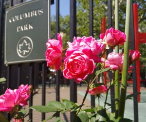 Flowers at Columbus Park in Chinatown NYC
