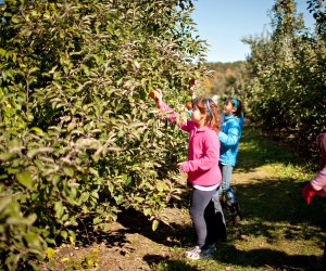 After you pick apples, sample a doughnut and visit animals at Cider Hills Farm. Photo courtesy of Massachusetts Office of Travel & Tourism