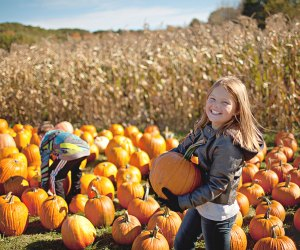 Expect pumpkins galore at Cider Hills Farm Pumpkin Patch —which shape do you want this year? Photo courtesy of Massachusetts Office of Travel & Tourism