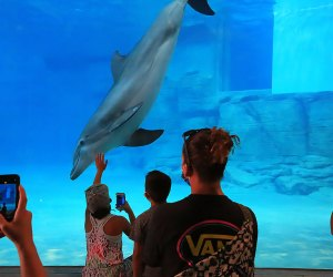 a dolphine swim a at an aquarium while people look on