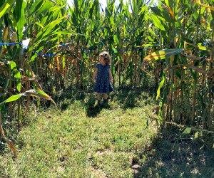 Get lost in Alstede Farm's corn maze. Photo by Rose Gordon Sala