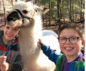 Bond with llamas! Photo courtesy of Country Quilt Llama Farm