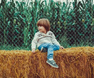 Fall is full of fun things to do with kids in Connecticut, from hay rides to corn mazes, pumpkin patches and fall foliage.